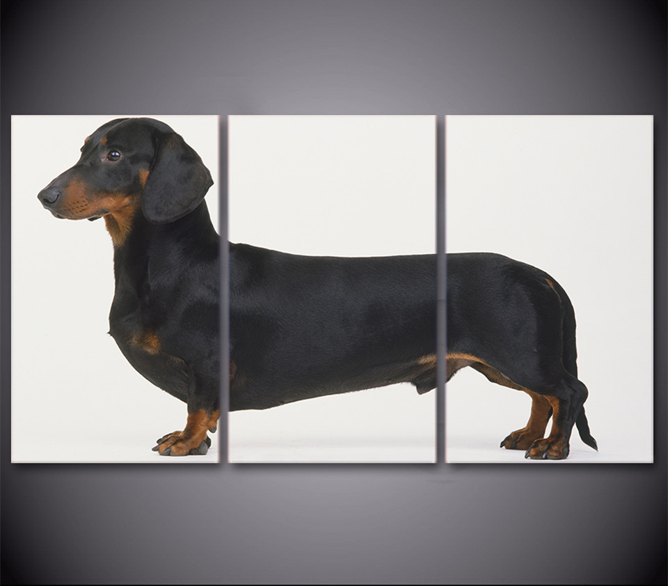 popular dachshund posterbuy cheap dachshund poster lots from  - hd printed  piece wall canvas art dachshund dog breed painting picturesfor room decor canvas