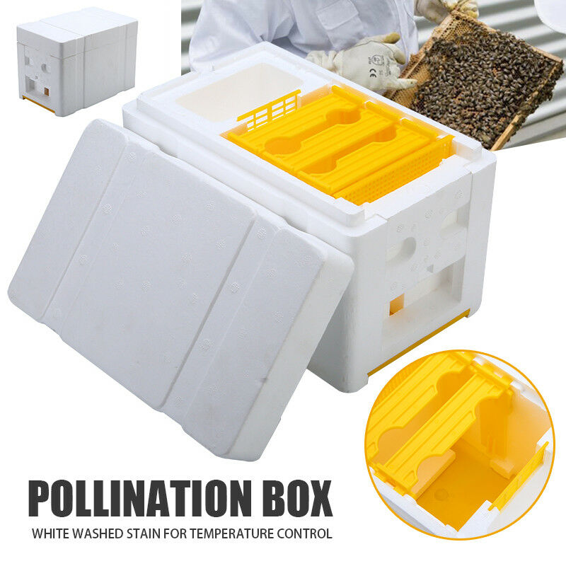 Bee Hive Beekeeping King Box Pollination Box Foam Frames Beekeeping Tool Kit Harvest Bee Hive Home Hive Case Beekeeper tools