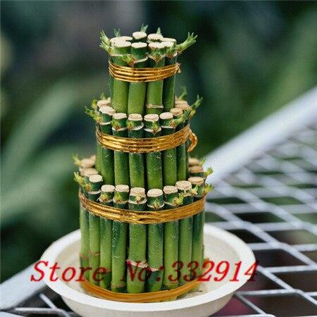 online kaufen gro handel bambus pflanzen verkauf aus china. Black Bedroom Furniture Sets. Home Design Ideas