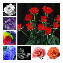 100Pcs/bag Amazingly Beauty Rose Bonsai Flower With Red Edge Seedling Rare Color Popular Garden Perennial Bush Or Bonsai Flowe(China)
