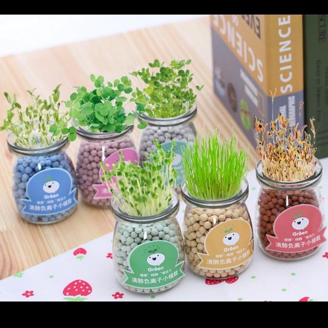 Plante pour bureau mignon mini pot de fleur maison et - Table jardin sans entretien saint paul ...