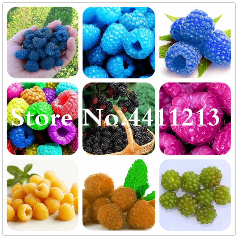 Hot Sale! 500 Pcs Raspberry Fruit Tree, Organic Heirloom Fruit Bonsai Trees,Sweet and Fresh Plant for Home Garden Supplies