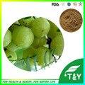 100g Nova Chegada Phyllanthus emblica/Amla Extrato com frete grátis