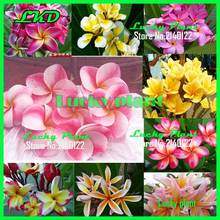 Home Garden - Garden Supplies - Plumeria Rubra Frangipani Mix 100Fresh Seed Rare Real Madam Poni Tree Succulent Plumeria Mix Seeds A2