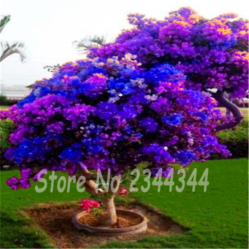 popular rhododendron azalea buy cheap rhododendron azalea lots from china rhododendron azalea. Black Bedroom Furniture Sets. Home Design Ideas