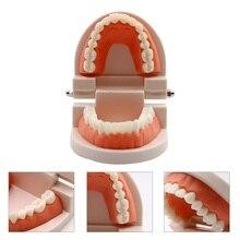 Стоматологическая модель для взрослых, обучающая модель, демонстрация типодонта, модель белых зубов для взрослых, тренировочная модель