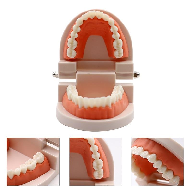 Dental Adult Teeth Model Teaching Study Typodont Demonstration White Adult Teeth Model Training Model