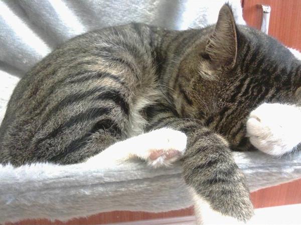 cat hammock radiator Cat Hammock Radiator Bed with Cozy Sheepskin Effect Cover HTB1EE09OVXXXXc