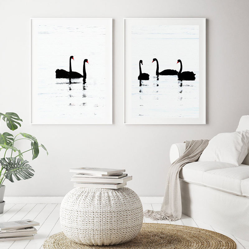 White Swans Black And White Art Canvas Poster Print Wall Decor