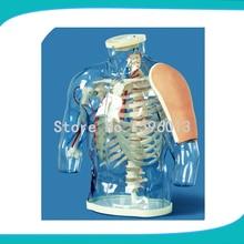 Parte superior do braço de Injeção Intramuscular e Contrastive Model, Transparente Contrastive Modelo de Sistema de Injeção Intramuscular