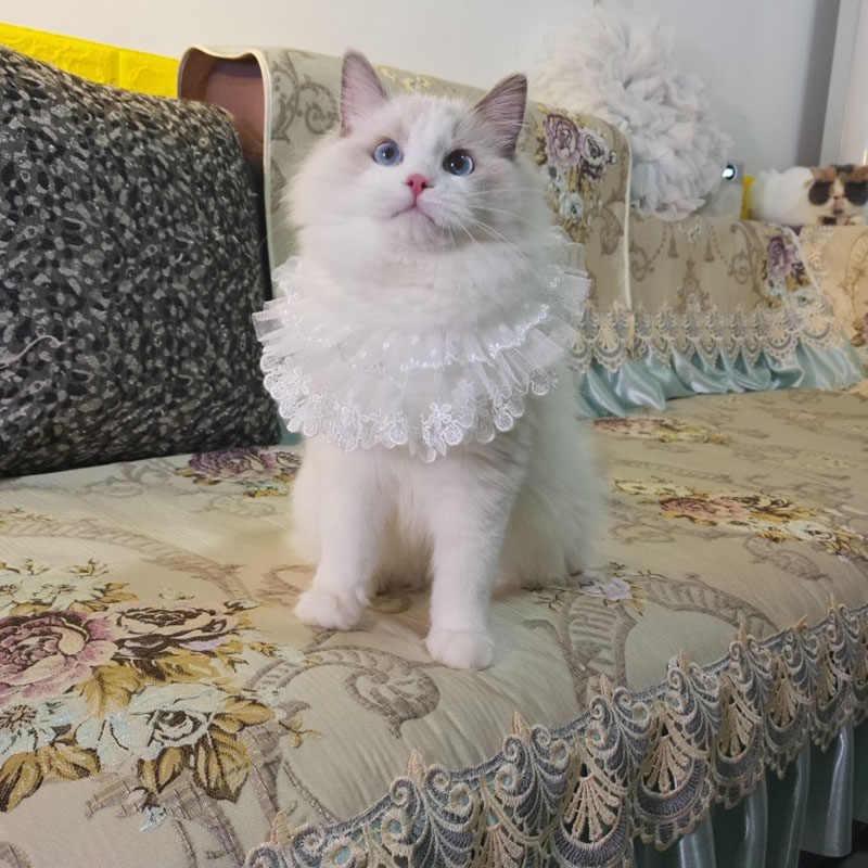 調節可能なペットネクタイネックレス犬の首輪白レースの真珠小型犬猫手作りネクタイビブペットジュエリーアクセサリー
