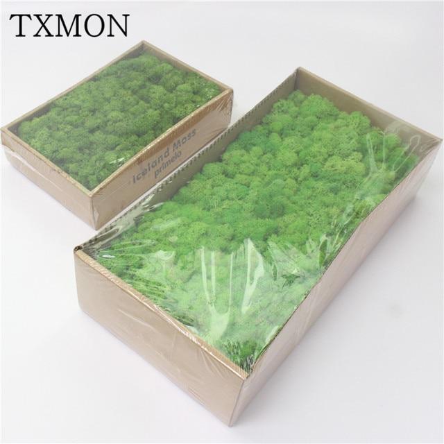 Hohe qualität Simulation grüne pflanze unsterblich gefälschte blume Moos gras hause wohnzimmer dekorative wand DIY blume mini zubehör
