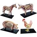 Anime 3D 4D Vison Cavalo Vaca Porco Anatomia Médica Anatômica Modelo Animal Puzzels Para Crianças Esqueleto Educacional Ciência Brinquedos