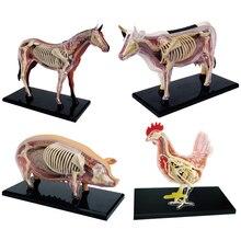 Anime 3D 4D Vison Horse Pig Cow Anatomy Medical Anatomic Animal Model Puzzels For Children Skeleton Educational Science Toys