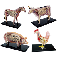 Anime 3D 4D Vison Horse Pig Cow Anatomy Medical Anatomic Animal Model Puzzels For Children Skeleton Educational Science Toys