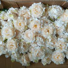زهور الفاوانيا الفاوانيا الحريرية 15 سنتيمتر زهور الفاوانيا 100 زهور بالجملة الزهور السائبة لخلفيات الزفاف