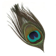 10 ADET Doğal Tavuskuşu Gözü Tüyü Fly Bağlama Streamer Uçar Gövde Malzemesi