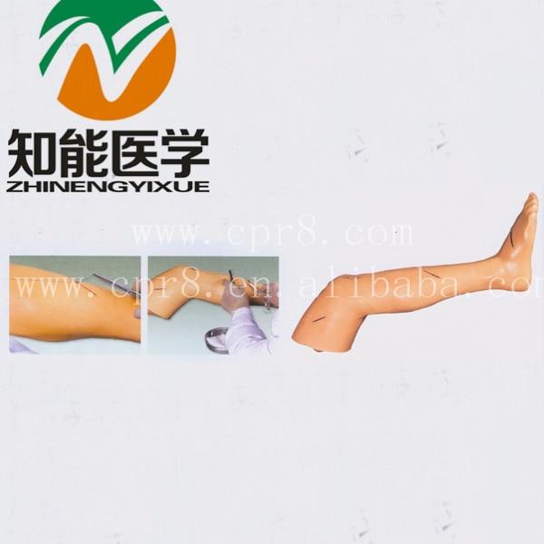 BIX-LF2 Senior Surgical Leg Suture Training Model  MQ196 bix lf2 advanced surgical leg suture training model g001