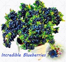 Vegetables and fruit seeds BlueBerry seeds Black pearl Blueberries DIY Countyard Bonsai plants Seeds for home & garden 100 seeds