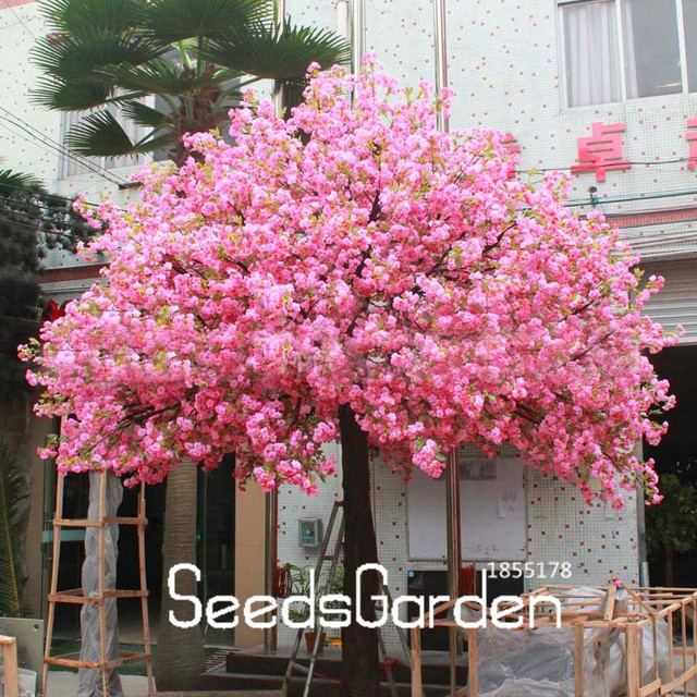 Time Limit 10 Seeds Bag Red Anese Cherry Blossoms Dwarf Tree Chic