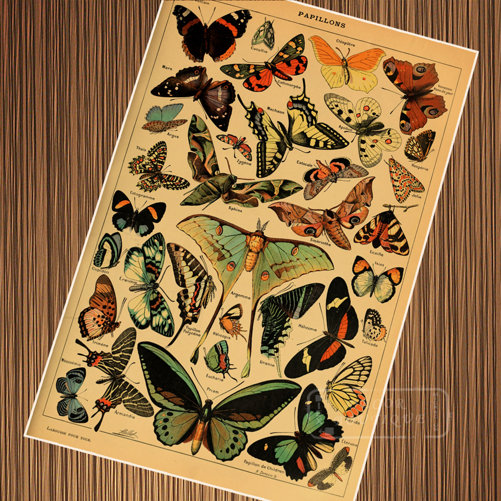 Vintage Butterfly Species Encyclopedias Illustration Retro Poster Canvas Painting DIY Wall Paper Posters Home Decor Gift