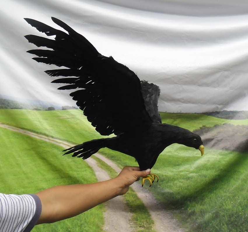 about 45x85cm simulation black eagle bird model toy ,plastic foam&feathers spreading wings eagle model ,home decoration w5609 huge creative simulation wings seagull toy plastic