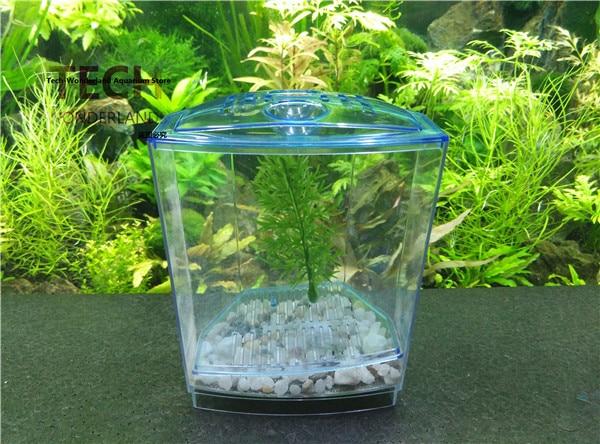 betta pesci d'acquario-acquista a poco prezzo betta pesci d& ... - Acquario Casa Funzionamento E Prezzi