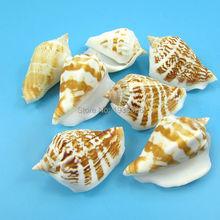 Natural Beach Sea Shell Decoration 100pcs 80pcs 60pcs White Small Conch Concha Seashell Crafts For Aquarium Ornament Accessories