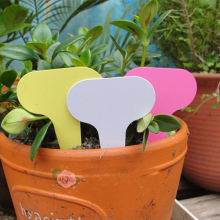 50pcs 6 x10cm Plastic Plant T-type Tags Markers Nursery Backyard Ornament Tags for Crops Flower Gardening Labels