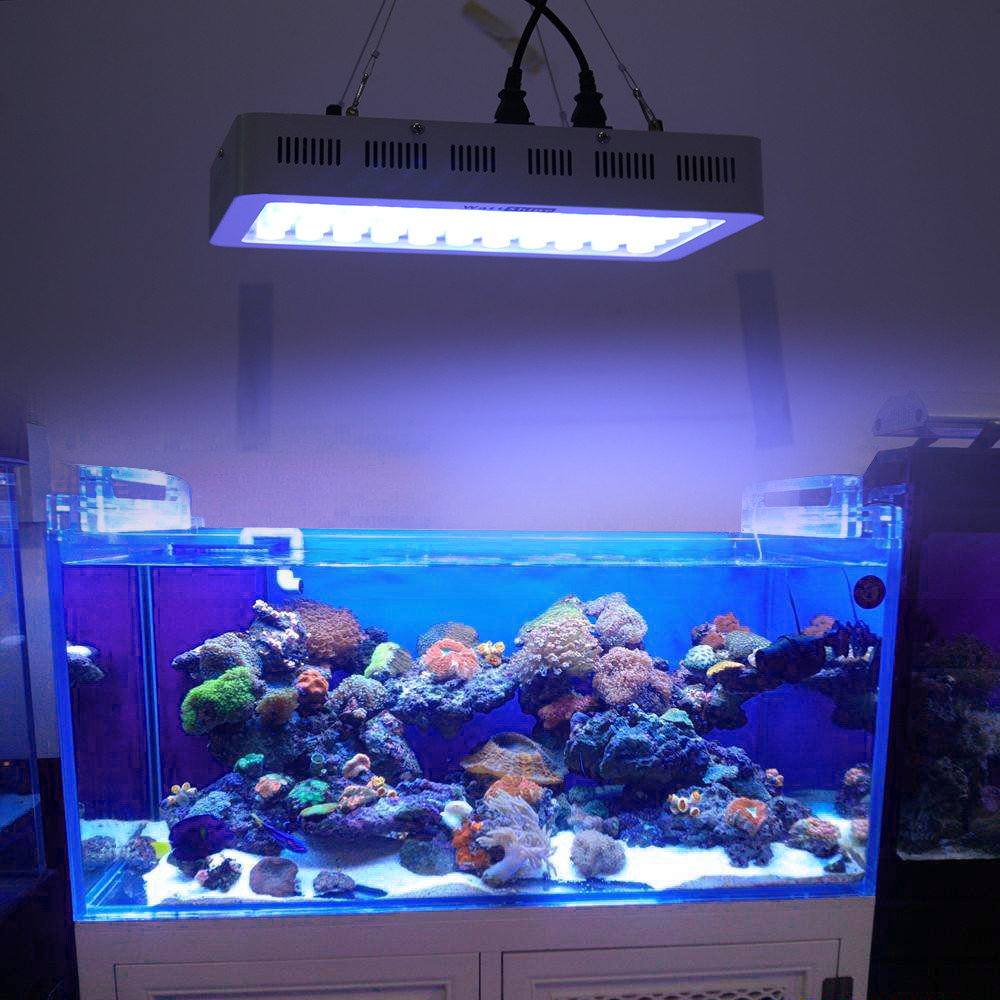 Fein Aquarium Led Lampen Fotos - Heimat Ideen - teatrooltrebambini.info