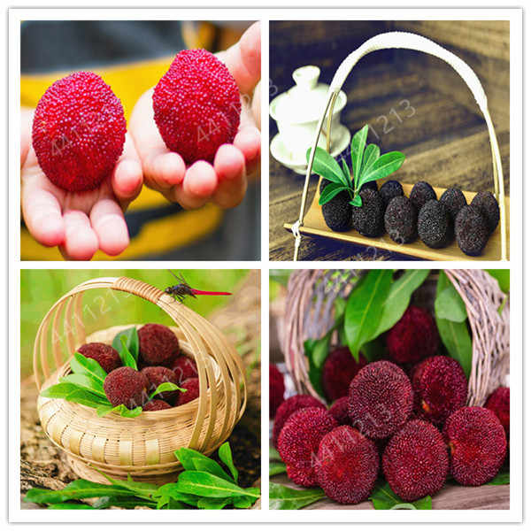 5pcs/ arbutus plant strawberry fruit garden easy to grow delicious  arbutus yang mei tree for home garden