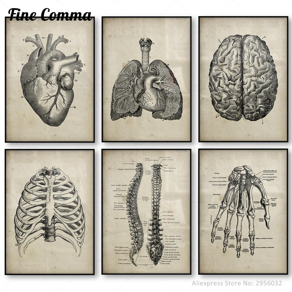 Human Anatomy Medical Anatomy Science Vintage Posters Art Canvas Print Medical Doctor Clinic Wall Decor Pictures Canvas Painting