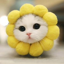 Young Cat Takes Pictures of  Cute Yellow Circle Pet Sunflower Headgear Clothes Costume