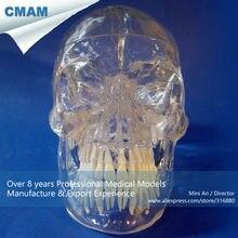 CMAM-SKULL09 Classic Life Size Transparent Human Skull, Anatomical Skull Model for Medical Science