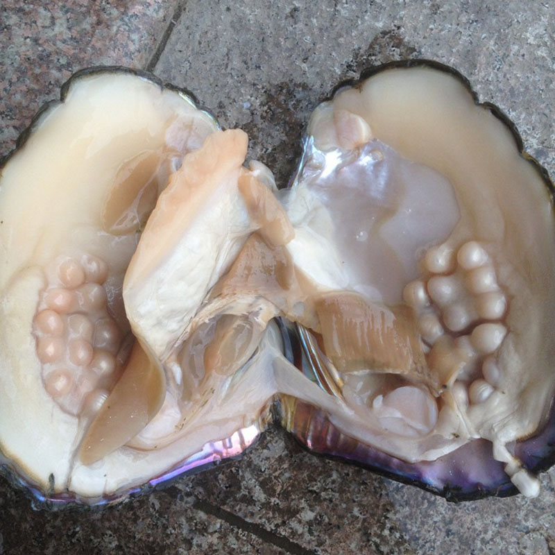 Aliexpress.com : Buy Oysters Pearls Amazing Price 5pcs ...