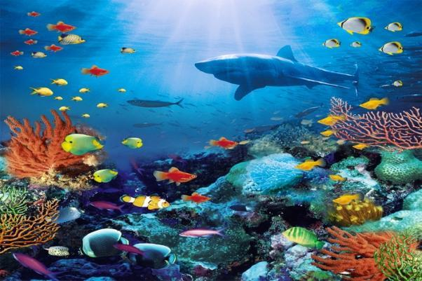 Vinyl Props Photo Background Kid Ocean World Colourful