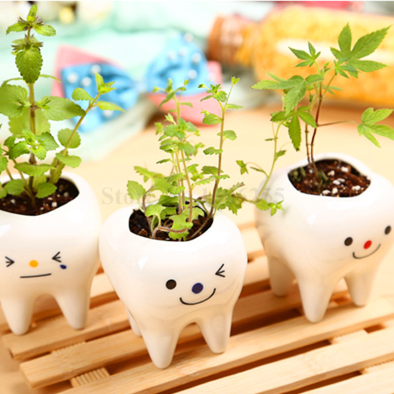free shipping 1 set mini bonsai with tooth shaped pot soil and seeds for home and beautifying office bonsai grass pots planters mini