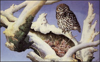 Home Decor Snowy owl Painting Home Decoration Oil painting Wall Pictures for living room Home Decor paints Wall art paint 3