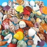 Natural Beach Sea Shells Concha Coral Conch 300g Fish Tank Aquarium Decoration Nautical Decor Decorative Seashells Crafts 1-11cm