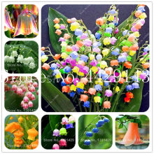 Free Shipping 100 pcs/bag Bell Orchid Bonsai Flower Campanula bonsai Flower 9 colors Convallaria plant pot for home garden(China)