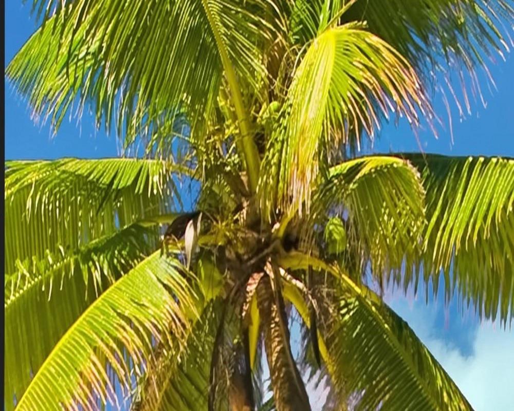 Free Shipping Custom 3d Wallpaper HD Coco Seascape Landscape ...