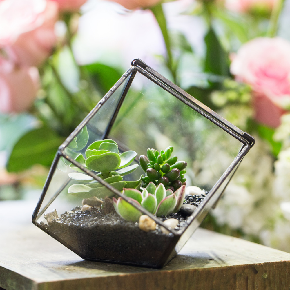 Փոքր DIY երկրաչափական խորանարդի ապակե պլանշետ Պատշգամբի կուտակված բույսեր Բույսեր Displayուցադրվում են դեկորատիվ Terrarium տուփ պլաստեր Ծեփամածիկ ծաղիկներով զամբյուղով ծածկով