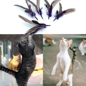 Quality Pet 5PCS REFILLS for Da Bird feather Wand Cat Kitten Interactive Toys Refill Home Cat Feather Toy Drop Shipping