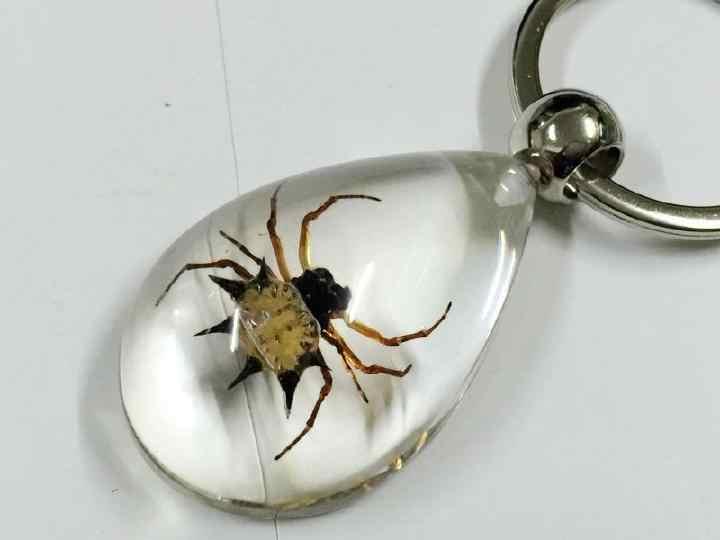 Livraison gratuite 10 PCS réel de barbarie araignée insecte porte-clés Lucid Drop mode trousseau taxidermie cadeau