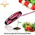 Led planta crece luces 5050 led tira dc12v rojo azul 3:1, 4:1, 5:1, para Cultivos Hidropónicos de Efecto Invernadero, 5 m/lote