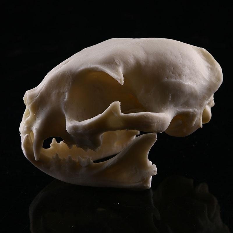 Médica Esqueleto Esqueleto Modelo de Ensino de
