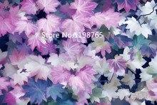 """Neue Ankunft! 30 STÜCKE Lila Ahorn Samen Selten in Der Welt Kanada ist eine Schöne Lila Ahorn Bonsai Pflanzen Bäume """"lila Geist""""(China)"""