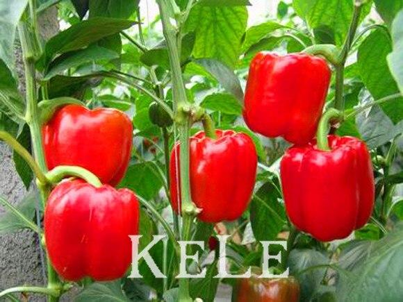 Hot Selling 100pcs Red Sweet Pepper Plant, Vegetable Flores, Bell Pepper Plantas, Bonsai Pot Home Garden,63UWFJ