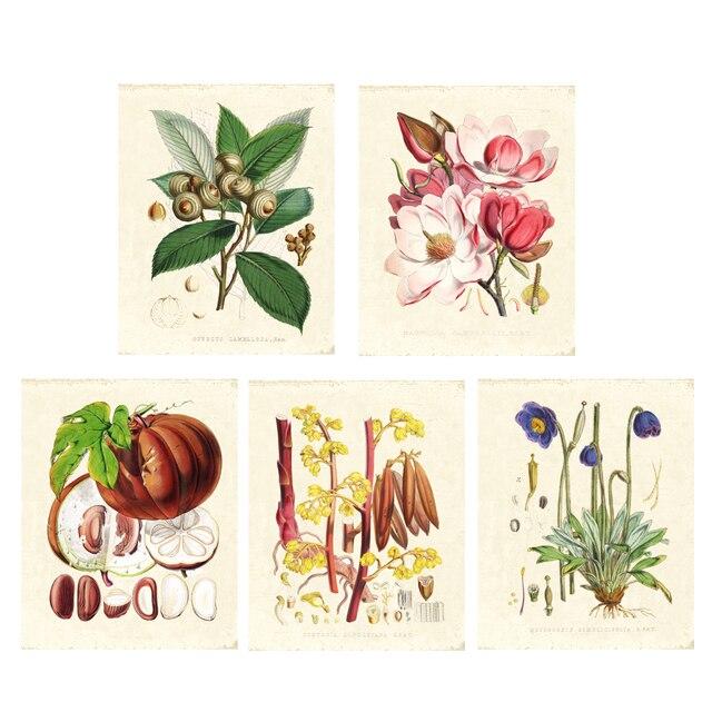 Vert plantes ensemble de 5 Vintage illustrations Botaniques, art floral imprime HD impression Fleur Wall Art tirages seulement sans cadre 3