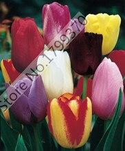 50 Тюльпан семена, тюльпан цветы, красивый тюльпан смешанных цветов бесплатная доставка